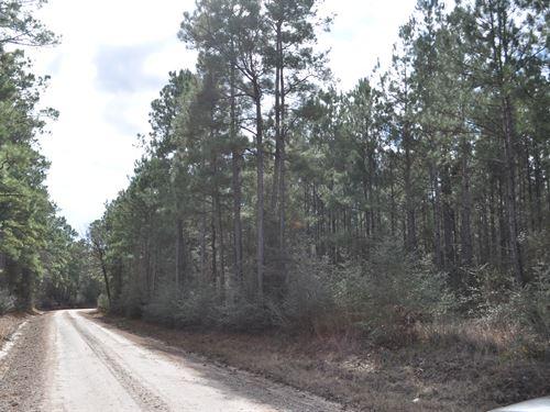 100 Acres Fm 247 : Huntsville : Walker County : Texas