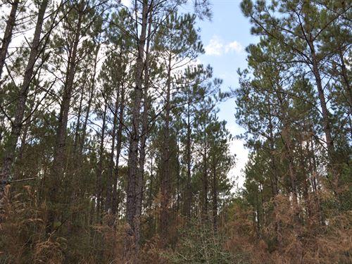 67 Acres Fm 247 & Lost Indian Camp : Huntsville : Walker County : Texas