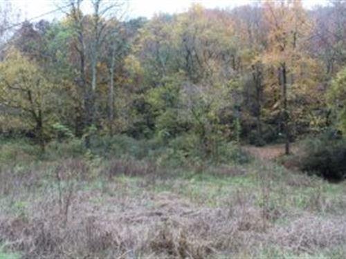 Little Wills Creek Tract : Collinsville : DeKalb County : Alabama