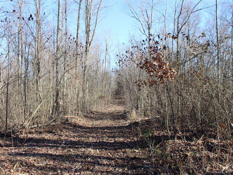 Beechgrove Rd - 44 Acres : South Bloomingville : Vinton County : Ohio