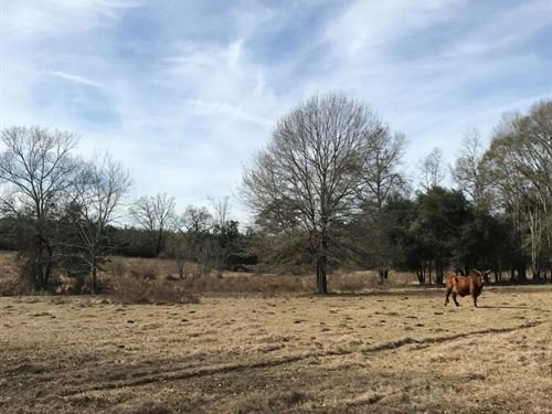 108 Acres of Pasture, Timber And Ca : Jayess : Lawrence County : Mississippi