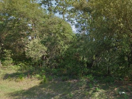 Citrus County, Fl $8,000 Neg : Citrus Springs : Citrus County : Florida