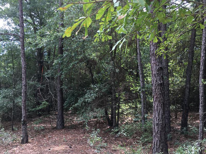 Hunting And Recreation Tract : Irwinton : Wilkinson County : Georgia