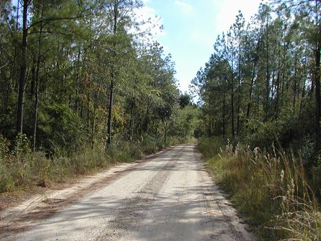 +/- 160 Acres - Grapevine Road : Brooklyn : Forrest County : Mississippi
