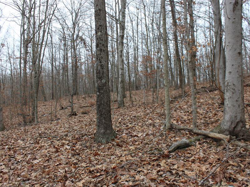 Sr 792 - 30 Acres : Stockport : Morgan County : Ohio