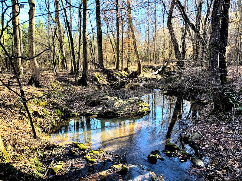 Timber Investment Opportunity : Kinards : Newberry County : South Carolina