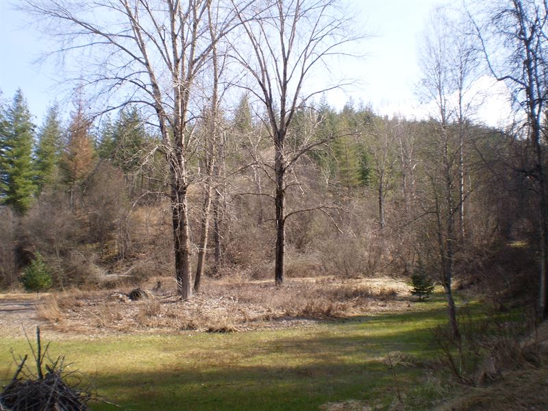 Private Forest & Hunting Preserve : Smelterville : Shoshone County : Idaho