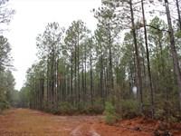 Timberland Investment : Hazlehurst : Jeff Davis County : Georgia