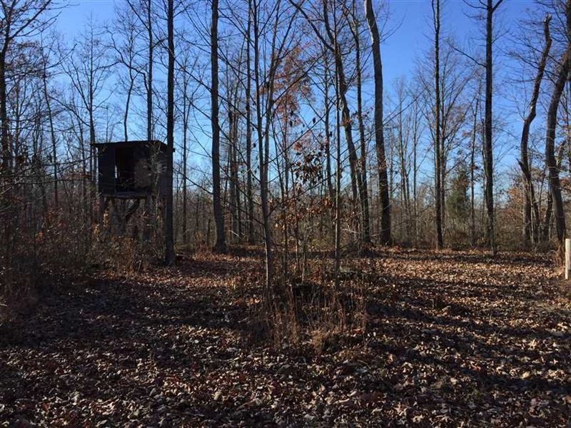 Hunting And Timber Tract in Erin : Erin : Houston County : Tennessee