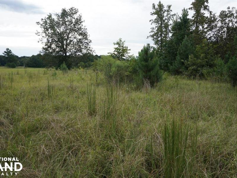 Lewis-Miles Lane Hunting Tract : Boligee : Greene County : Alabama