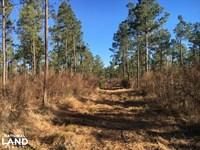Fairlane Rural Development Tract : Loris : Horry County : South Carolina