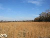 Goodman Pasture Land : Goodman : Holmes County : Mississippi