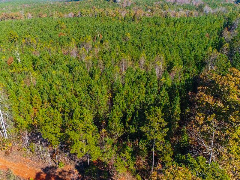 Plantation And Hunting Near Taxahaw : Taxahaw : Lancaster County : South Carolina