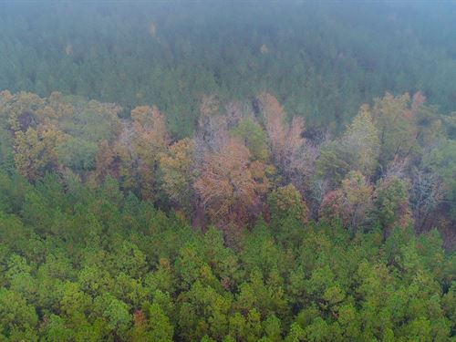 Hardwoods & Pines Near Great Falls : Great Falls : Lancaster County : South Carolina