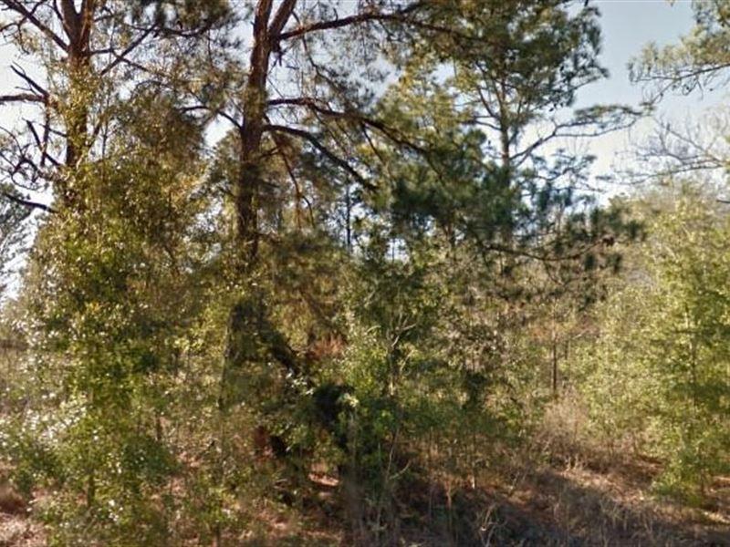 Levy County, Fl $22,500 Neg : Williston : Levy County : Florida