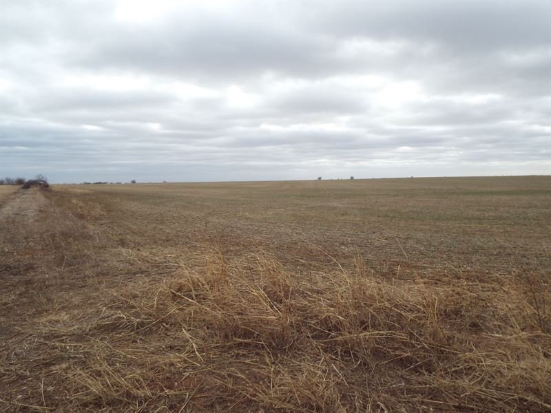 Prime farmland with large pond land for sale douglas for Pond reeds for sale