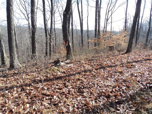 19.19 Acres Of Pristine Woodlands : Nashville : Brown County : Indiana
