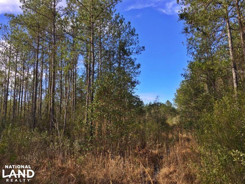 Brown Road Tract : Fruitdale : Washington County : Alabama