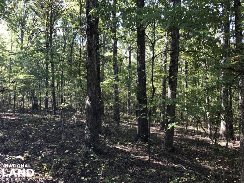 47 Acres Timberland & Hunting La : Bradford : Jackson County : Arkansas