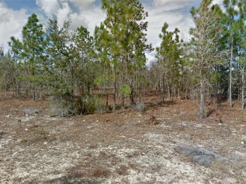 Putnam County, Fl $70,000 Neg : Interlachen : Putnam County : Florida