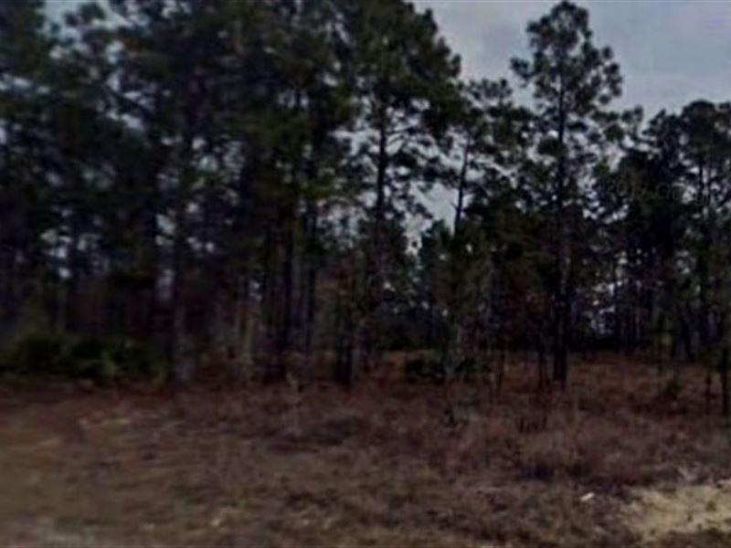 Hernando County, Fl $24,000 Neg : Brooksville : Hernando County : Florida