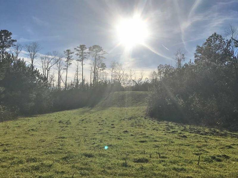 Sweetwater Creek Tract : Cuba : Sumter County : Alabama