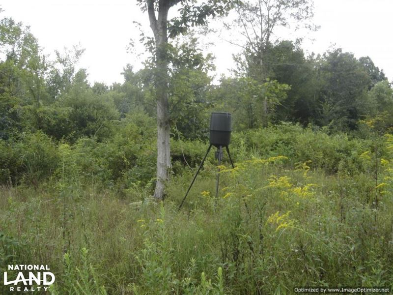 40 Acres Hunting Land Near Louisvil : Louisville : Winston County : Mississippi