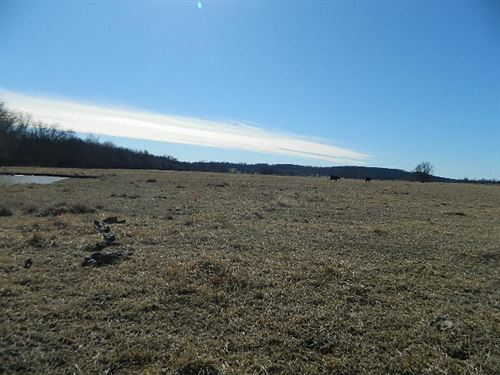 Cattle Ready : Tahlequah : Cherokee County : Oklahoma