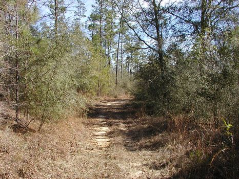 47 +/- Acre Transitional Property : Hattiesburg : Forrest County : Mississippi