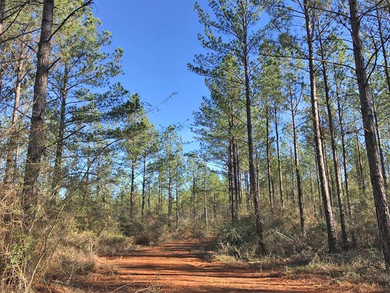 Wawbeek Tract : Flomaton : Escambia County : Alabama