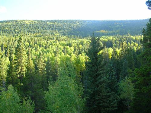 Evergreen Cub Creek Ranch And In-Ho : Conifer : Jefferson County : Colorado
