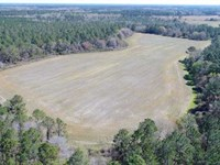 480 Ac Timberland And Farm Land : Nicholls : Ware County : Georgia