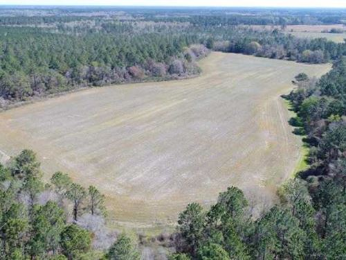 480 Ac Timberland And Farm Land : Nicholls : Ware County : Georgia