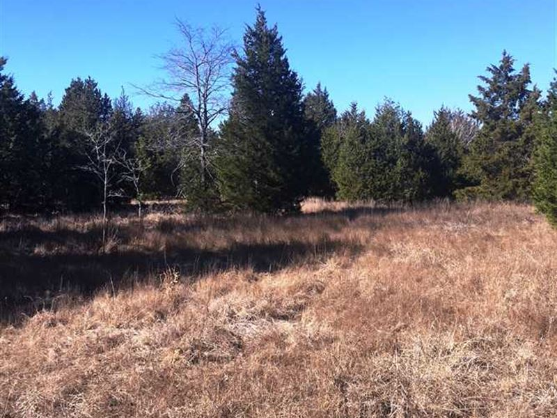 83.957 Acre Hunting And Recreation : Tennessee Colony : Anderson County : Texas