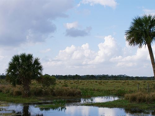 Okaloacoochee Ranch : Immokalee : Collier County : Florida