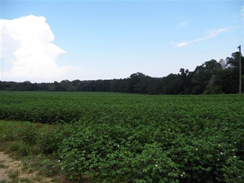 99 Acres Farm & Timberland Pike Co : Enon : Pike County : Alabama