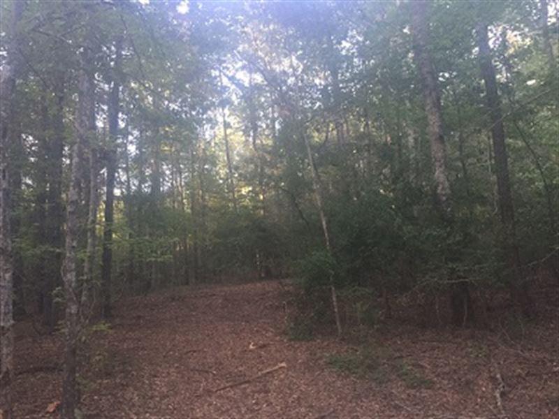 30 Acre Wooded Home Site Near Troy : Troy : Pike County : Alabama