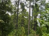 60 Acres in Cascilla Ms : Cascilla : Tallahatchie County : Mississippi