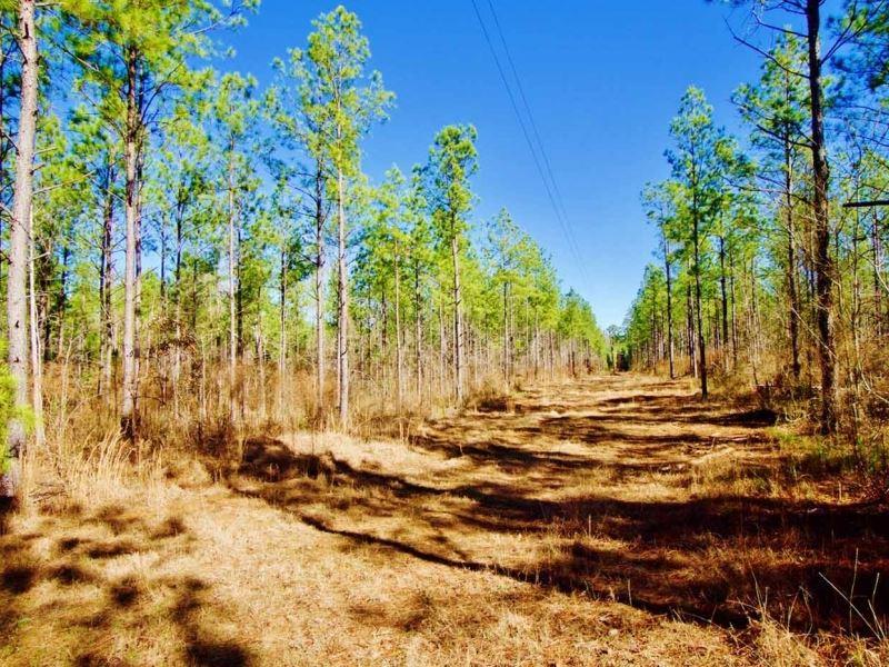 55 Acre Timber-Development Prope : Shongaloo : Webster Parish : Louisiana