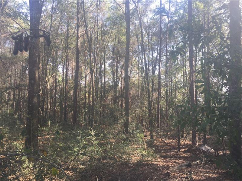 92 Ac Timberland In South Alabama : Geneva : Geneva County : Alabama