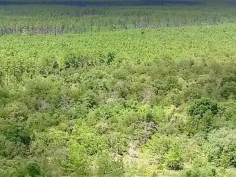 Calhoun County, Fl $32,000 Neg : Altha : Calhoun County : Florida