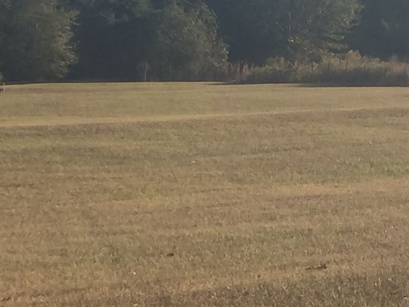 11.94 Acres Timberland In Pike Co : Troy : Pike County : Alabama