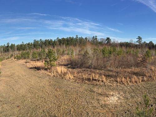 Big Creek Tract : Saluda : South Carolina