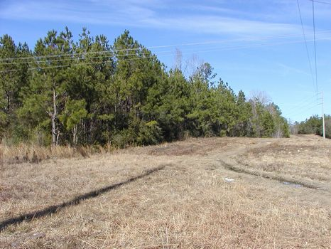 120 +/- Acres Transitional Property : Hattiesburg : Forrest County : Mississippi
