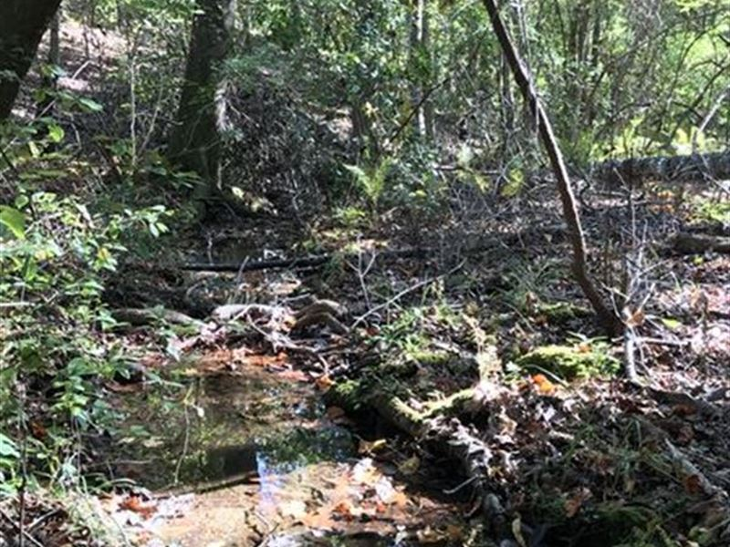Mellow Valley Hunting Property : Cragford : Clay County : Alabama