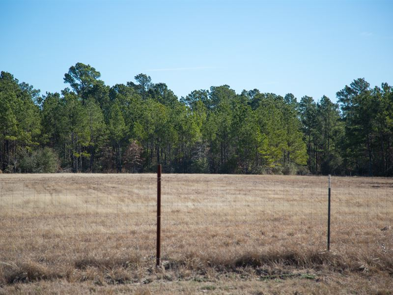 4.6 Ac Tract 2 Dawson Hill : Huntsville : Walker County : Texas