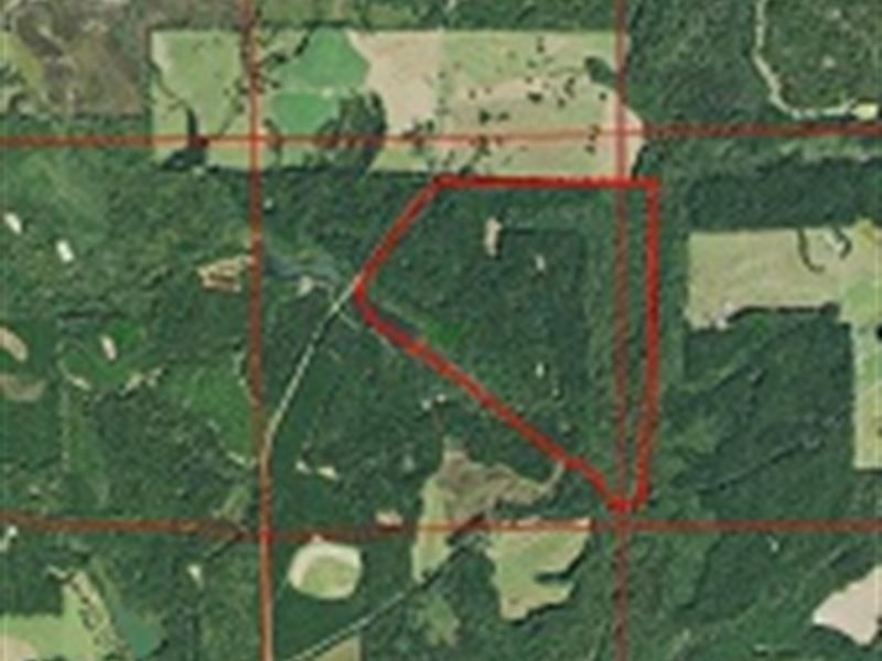 269 Ac Timberland Near Troy, Al : Troy : Pike County : Alabama