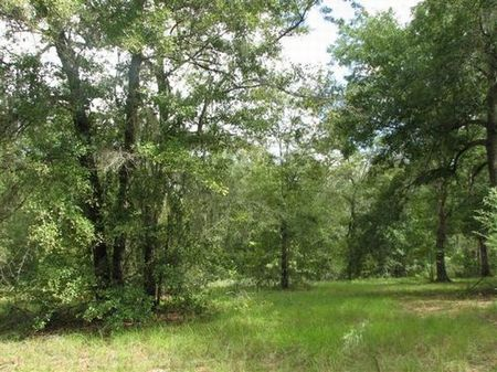 10 Acres (cl-057) : Hawthorne : Alachua County : Florida