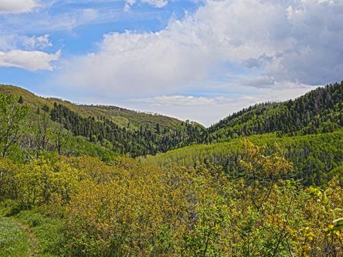 Camel Point Ranch : Grand Junction : Mesa County : Colorado