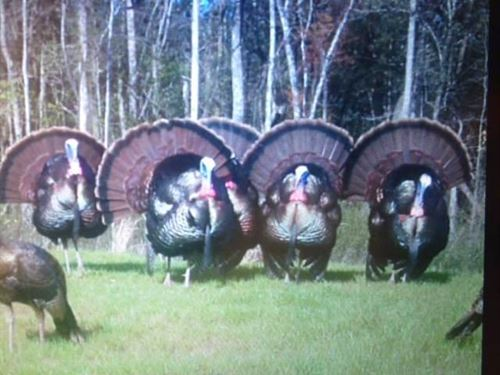 111.36 Acres of Hunting And Recreat : Weir : Choctaw County : Mississippi